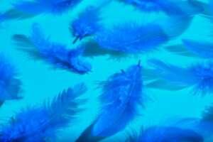 Plumes Bleu Vif Surface Bleu Clair 156874 25